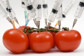 Are GMO's really dangerous? And other food facts