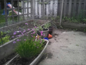 What I learned fromgardening