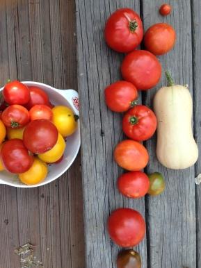 Tomatos Galore!